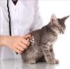 Ветеринарные клиники в Макарове